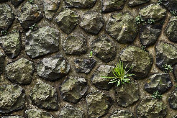 Apfel-, Gras- und Steinpapier? Die Zukunft?